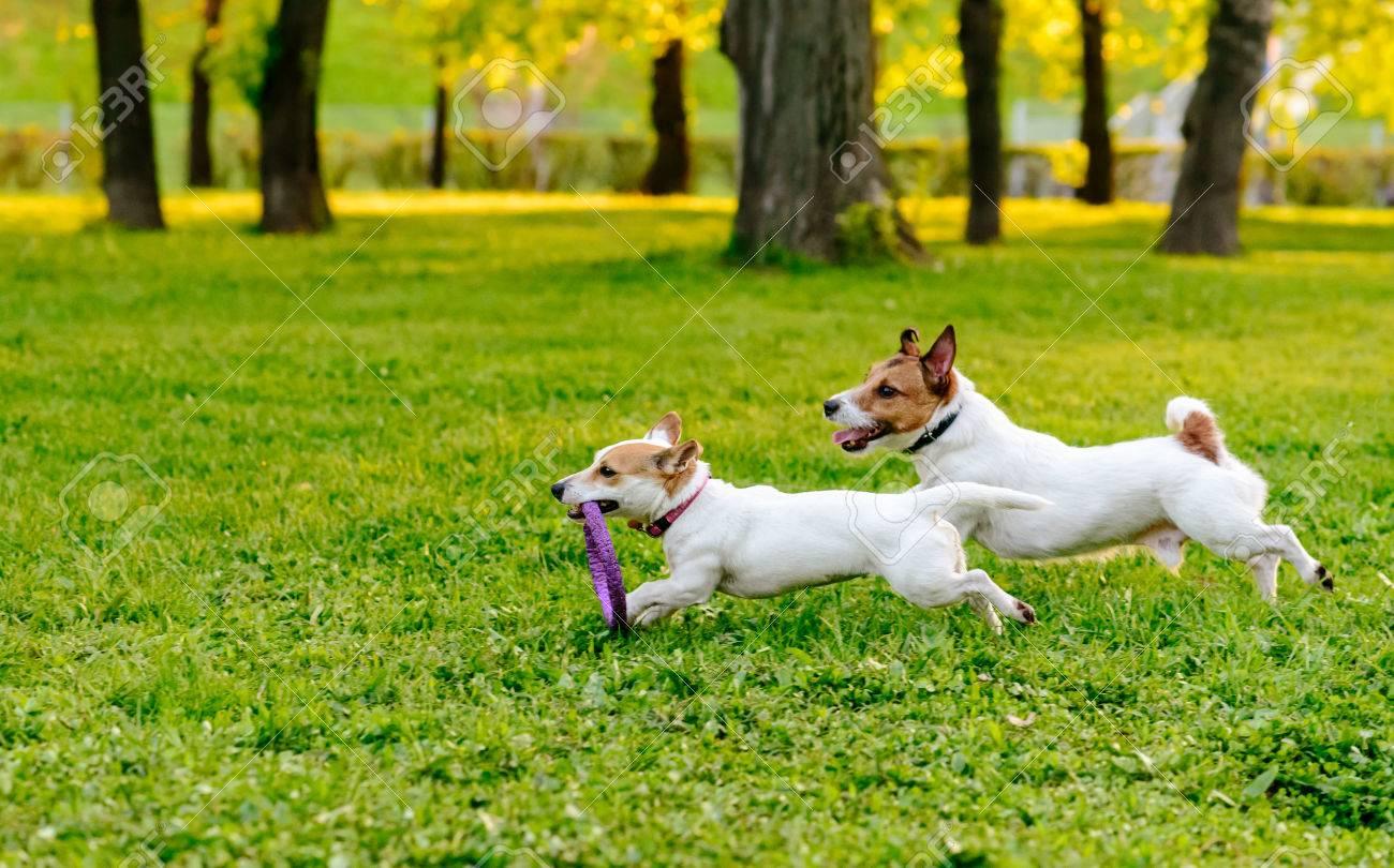 Las Mejores Sugerencias y Descuentos en Juguetes sobre Parque cachorros